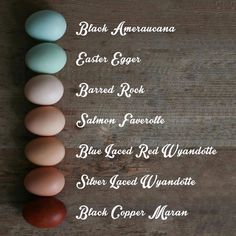 Feels fitting to share this today when so many people are coloring their eggs. We chicken folk so lucky to skip the coloring process and enjoy natures colored eggs. Here are some of the breeds I've owned and their egg colors. Backyard Chicken Coops, Diy Chicken Coop, Chickens Backyard, Inside Chicken Coop, Chicken Barn, Keeping Chickens, Raising Chickens, Breeds Of Chickens, Poultry Breeds