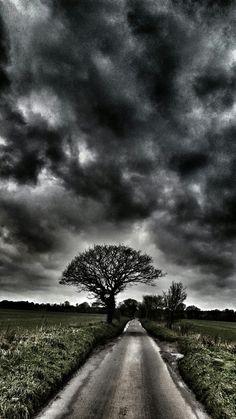 Worting woods. Hampshire.