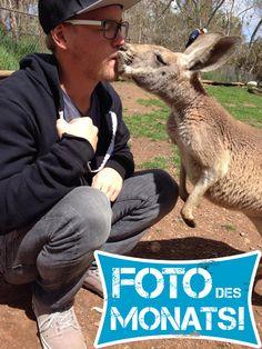 Foto des Monats November! Vom #Känguru geküsst! Tom bei seinem #WorkandTravel Aufenthalt in #Australien