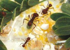 DIY: Simple ways you can study ant behavior in your own backyard. Ants, Simple Way, Behavior, Backyard, Study, Make It Yourself, Ethnic Recipes, Diy, Behance