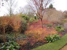 Cambridge Botanic Gardens Cambridge Botanical Gardens, Winter Colors, Winter Garden, Garden Ideas, Country Roads, Bike, Colours, Explore, Landscape