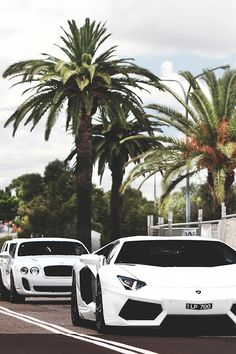 white Lamborghini and Bentley Continental GT Supersport