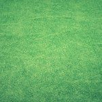 Your compound needs to look great and for tis reason the artificial grass will be ideal at all times because of the benefits discussed in this article. Lawn, Grass, Grasses, Herb