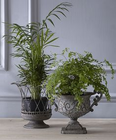 A pretty urn and wire planter to grace your garden room or windowsill Sold individually please select your product choice from the drop-down menu
