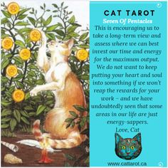 Monthly readings on my YouTube channel: www.youtube.com/c/cattarot Book your reading: www.cattarot.ca Love, Cat #tarot #tarotcards Pentacle, Tarot Cards, Channel, Reading, Cats, Youtube, Books, Tarot Card Decks, Gatos