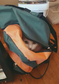 Cats in the bag