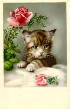 Vintage kitten with rose postcard