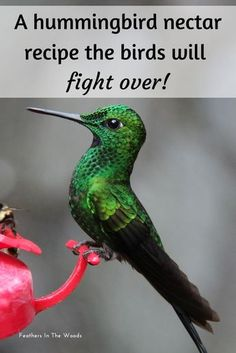 How to make hummingbird nectar. Homemade hummingbird nectar is more natural and better for the birds then the type with the red dye. Super easy recipe. #birdwatching #homesteading #hummingbirds