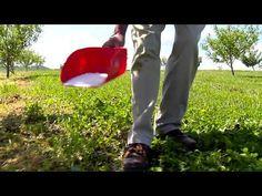 Fertilizing Your Established Fruit Trees - Growing with Stark Bro's