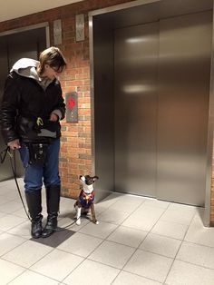 Training Your Dog to Ride an Elevator