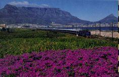 Blue Train South Africa - train travel, luxury train travel
