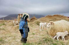 Sturluhóll a sheep farm near Blönduós in the North West of Iceland / Snorri Gunnarsson // OH MY GAWD those sheep!!!