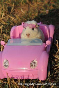 Cute Animal Memes, Animal Jokes, Cute Funny Animals, Baby Animals Super Cute, Cute Little Animals, Baby Animals Pictures, Cute Animal Pictures, Funny Hamsters, Pet Guinea Pigs