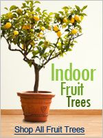 Indoor Fruit Tree Ideas - Decoration Design Ideas - ibmeye.com