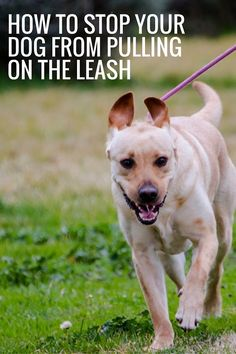 How to stop your dog from pulling on the leash!