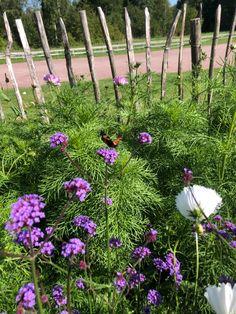 Cosmos, Butterfly, Garden, Flowers, Plants, Garten, Lawn And Garden, Outer Space, Flora