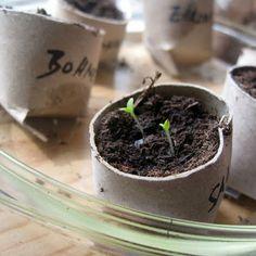 smørbrød_syltetøy: wachstumswerkstatt: nutzpflanzen in altpapier