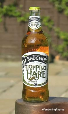Wandering Photos - Badger - Hopping Hare Ale (4.5%) - Hall & Woodhouse Brewery Blandford St. Mary Dorset England