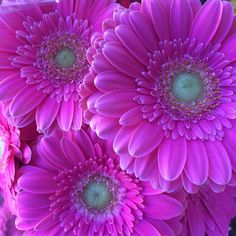 Commenting on and sharing adventures and experiences of everyday life living in a humble bungalow and on my walks. Pretty In Pink, Beautiful Flowers, Fuerza Natural, Fuchsia, Purple, Blackberry Cobbler, Good Morning Flowers, Gerber Daisies, Art Clipart