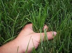 Secrets to keeping your grass green without chemicals