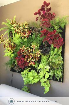 House Plants Decor, Plant Decor, Indoor Garden, Garden Art, Vertikal Garden, Earthy Home Decor, Vertical Garden Design, Leafy Plants, Outdoor Plants