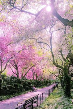Spring paths are new beginnings paths. This is Central Park NY.