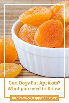 Visit here to check out can dogs eat apricots on PuppyFAQS Blog! If you are looking to find out if it's safe to give your puppy dried apricots as a snack, then this is the blog post for you! For the definitive guide on Can Dogs Eat Apricots, click to be directed to the PuppyFAQS blog. If you still need help after reading our article on whether or not your pooch can eat apricots, please leave us an email at liz@puppyfaqs.com and we'll get back as soon as possible. Happy pup parenting! :) Dried Strawberries, Dried Fruit, Fruits For Dogs, Apricot Seeds, Fruit List, Toxic Foods, Can Dogs Eat, Dried Apricots, Dog Eating