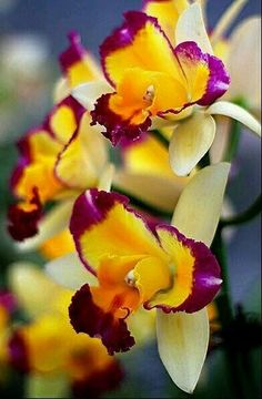 Orchids a.a Anggrek Unusual Flowers, Amazing Flowers, Yellow Flowers, Colorful Flowers, Beautiful Flowers, Purple Orchids, Yellow Orchid, Orchidaceae, Trees To Plant