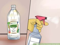 3 Ways to Get Rid of Common House Geckos - wikiHow