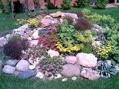 растения-для-альпийской-горки2.jpg (720×540)