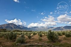 Tulbagh Valley, Western Cape by christoph.rebok, via Flickr @Saronsberg Cellar #Saronsberg #LikePinWin #VineyardCottageContest