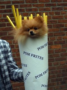 There were Pom Frites… | 26 Inspiring Dogs From NYC's Biggest Halloween Parade