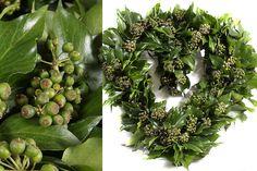 Green Inspiraton #Hedera www.adomex.nl Green powers!