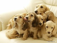 """Maybe if we all stare and look cute they will give us that yummy smelling snack they have"""