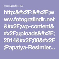 http://www.fotografindir.net/wp-content/uploads/2014/08/Papatya-Resimleri-5.jpg için Google Görsel Sonuçları