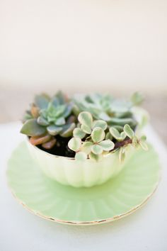 We could hit Goodwill and buy cool cups and saucers.....succulent centerpiece