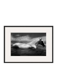 Art.com BlackWhite White Horse Swimming by Tim Lynch Framed Photographic Print