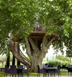 The Domaine des Andéols, a luxury holiday and restaurant development at St Saturnin-lès-Apt in the Luberon, has established a dining area 23 feet up a mature plane tree. It has sufficient space for 30 diners.