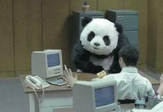 aktualizacja panda szeleje w serpach