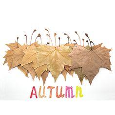 Herbst Blätter.