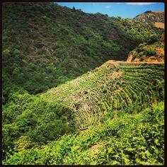 Viticultura extrema en la #RibeiraSacra #Ourense #Lugo #Spain by @Lenkster via Twitter