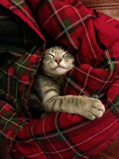 Cozy cat in a red Scottish kilt plaid quilt, sleeping soundly in this peaceful, restful place.