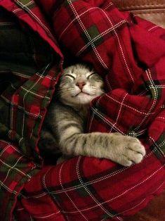 comfy, cozy sweetness