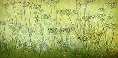 Wildflowers Lining the Trail - Lime - Canvas-taulut (maalaus) - Photowall