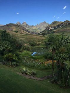 View from Cathedral Peak Hotel Kwazulu Natal, South Africa, Cathedral, Earth, Mountains, Acacia, Places, Landscapes, Trees