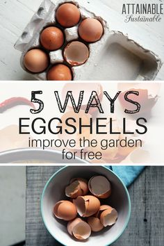 Wondering how to use eggshells in the vegetable garden? Here are 5 easy ways to use them to boost your garden's productivity -- and it won't cost a dime!