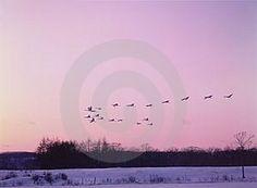 Birds © Jinyoung Lee  Dreamstime