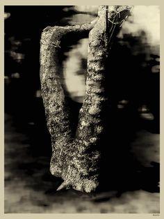 treeslisbon, sintra, óbidos, guarda, london, angola  @elloiphoneography…