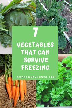 These 7 Veggies will survive and even thrive in temperatures under 32 degrees. #gardening #backyardgardening #vegetablegardening