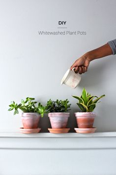 Turn these terracotta pots into cute whitewashed pots for your plants or herb garden